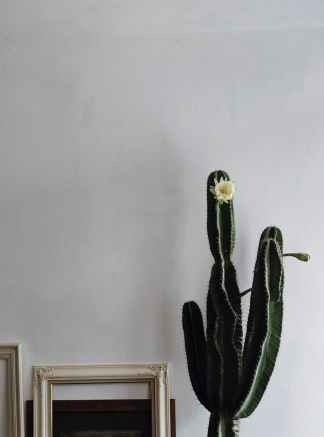green cactus plant beside white wooden photo frame